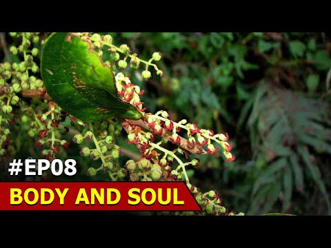More Than 20000 Medical Plants In Africa Jangles | Body And Soul | Episode 8