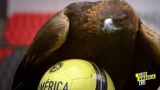 Gracias Afición Somos 300,000 Águilas