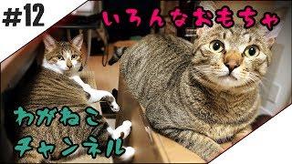 とても元気にしてます。 元気すぎて大きいです。 ※猫を初めて飼う猫初心...