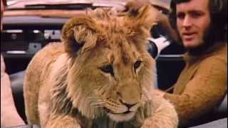 Gambar cover A lion called Christian   The whole Documentary Full length