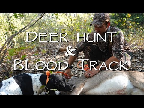 Deer Hunt and Blood Track – Gun Dog Training
