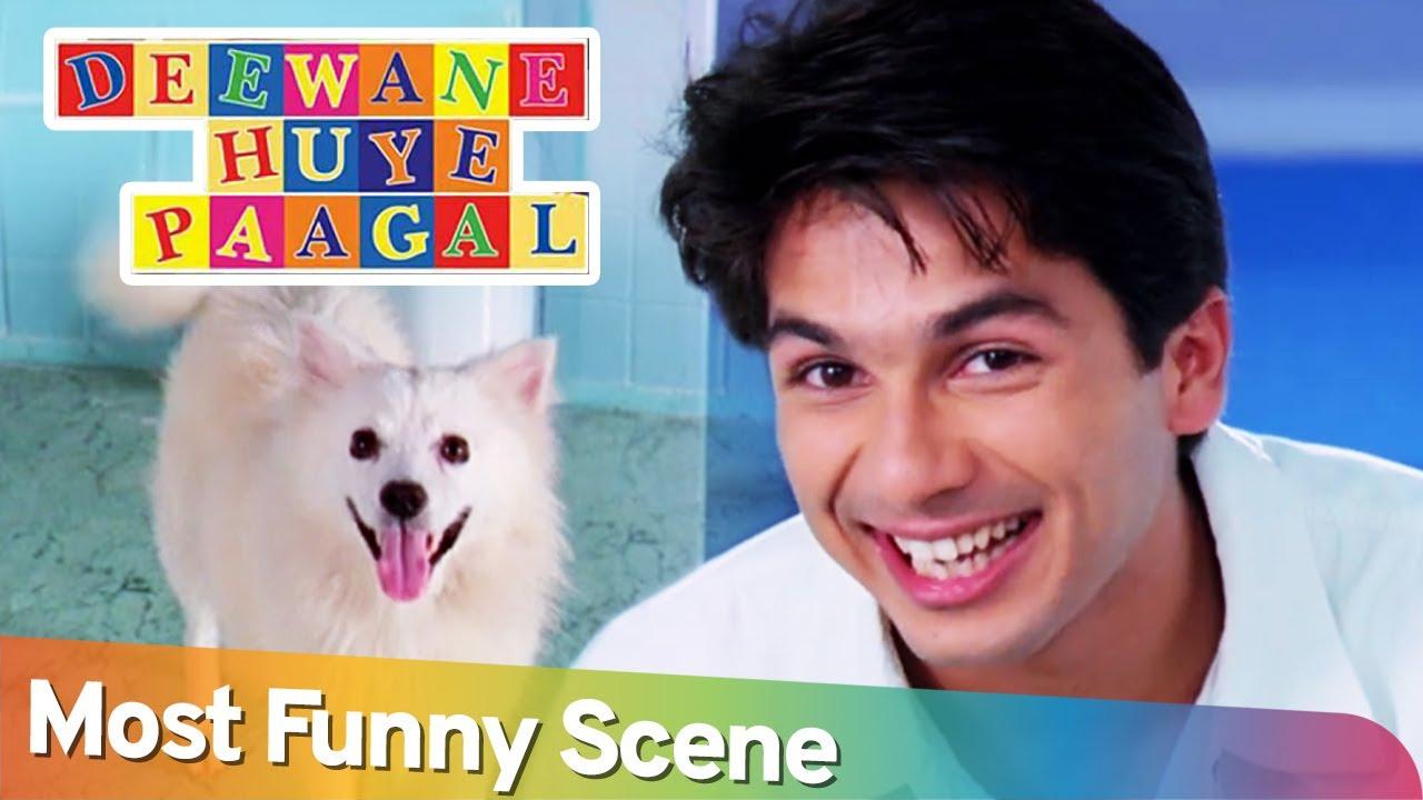 Most Funny Scene - Deewane Hue Pagal - Shahid Kapoor - Akshay Kumar - Paresh Rawal