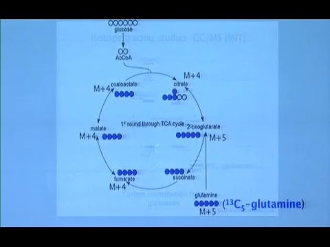 Tumor Cell Signaling and Metabolism