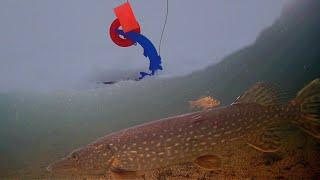 Щука Сошла с Ума Рыбалка на жерлицы Подводная съемка