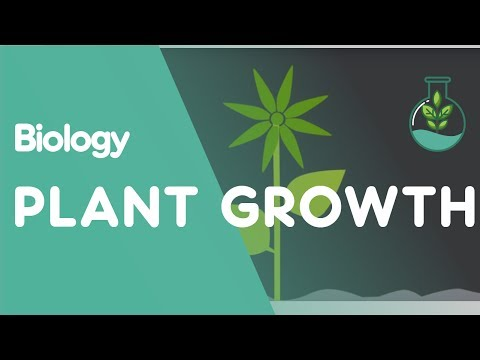 Plant Growth: Auxins and Gibberellins | Biology for All | FuseSchool