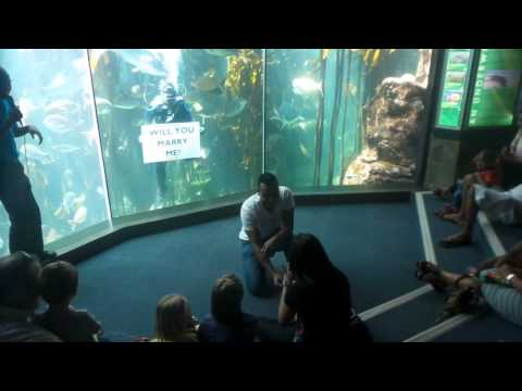 A proposal at the Two Oceans Aquarium