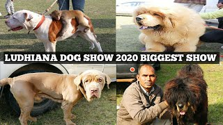 LUDHIANA DOG SHOW 2020 | KCI DOG SHOW | DOG MARKET WITH BREEDERS CONTACTS | DOG SHOW | SCOOBERS