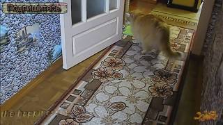 Кошачьи Игры в Салочки ✦ Приколы Про Кошек ✦ Funny cats ✦ Game cats tag ✦ LUCKY