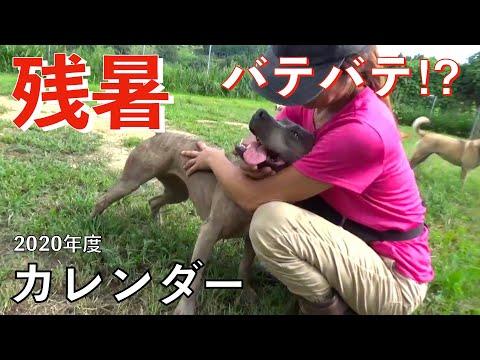 残暑の中本領発揮出来ない保護犬達 Animal Rescue Nursing