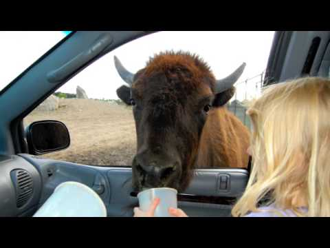 Safari In Ohio >> African Safari Park Port Clinton Ohio Youtube