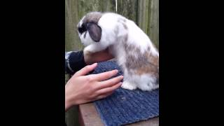 How to Properly Pick up and Hold your Rabbit