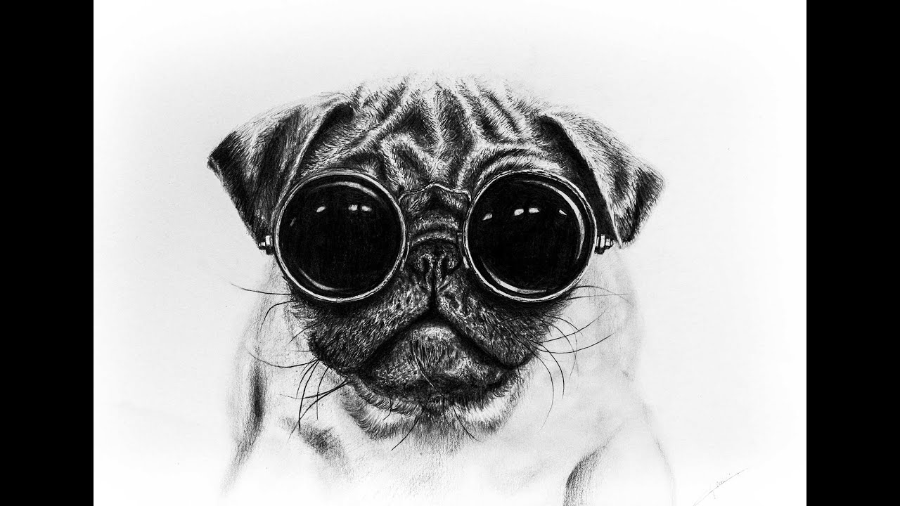 speed drawing pug with glasses youtube