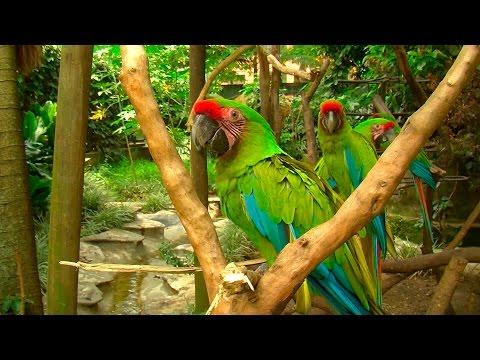 Illegal Wildlife Trafficking in Colombia part 1 - TvAgro por Juan Gonzalo Angel