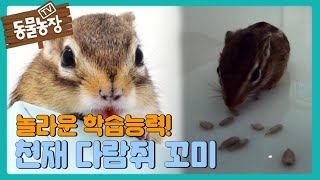 놀라운 학습능력을 지닌 '천재 다람쥐' 꼬미의 활약! I TV동물농장 (Animal Farm) | SBS S…