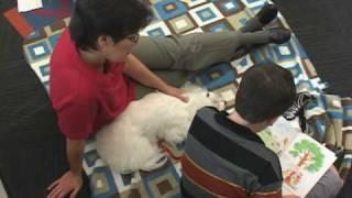 Man's Best Friend (dog Training In Atlanta)