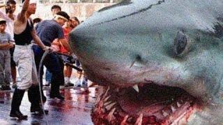Der Größte Hai der Welt! -