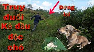 Truy Bắt Kẻ Đầu Độc Chó  | Và Màn Rượt Đuổi Nghẹt Thở | SBATVC