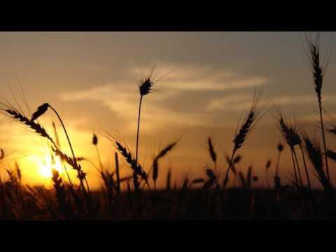 Adagio for Strings  Samuel Barber  Theme from Platoon