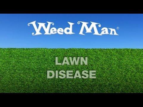 Lawn Disease | Weed Man Lawn Care USA
