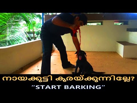 dog training : ' start barking'  Malayalam:kerala dog training : വളര്ത്തു നായയെ പരിശീലിപ്പിക്കാം