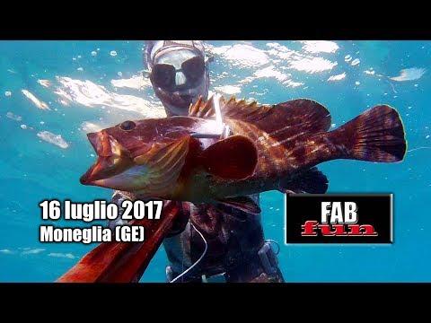 Pesca Sub | Liguria, Moneglia: attenzione, coda in galleria | Spearfishing, Chasse sous-marine