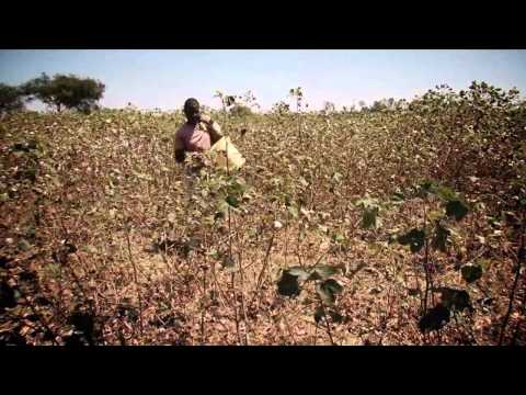 The Inclusive Business Models approach -- The case of Cotton in Kenya