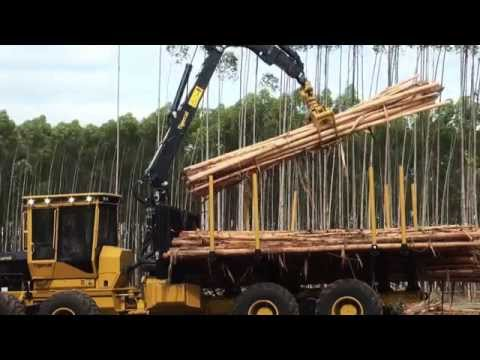 Tigercat cut-to-length harvesting system in eucalyptus