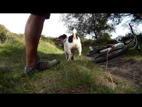 Mountain Biking with my Jack Russell, Poppy