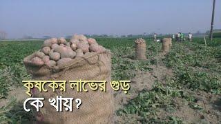 কৃষকের লাভের গুড় কে খায়? | bdnews24.com
