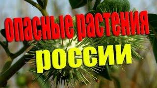 САМЫЕ ОПАСНЫЕ РАСТЕНИЯ РОССИИ !!! - Будьте осторожны.