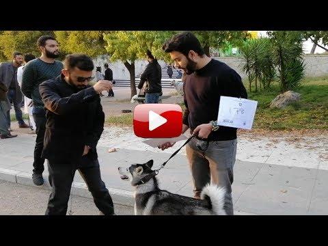 Dog Show Islamabad 2018 | kutta Kutti Show | Pak China Center