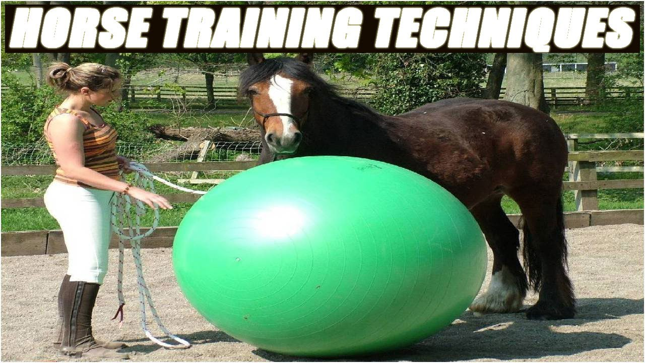 Horse Training Stock Photography - Image: 4237522 |Horse Training