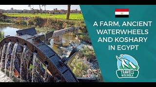 A Farm, Ancient Waterwheels And Koshary In Egypt