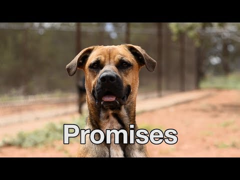 Advice About Love from The Love Dogtor Tip #4 – Promises