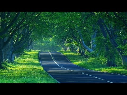 Way to munnar | Neryamangalam forest range  | kerala tourism