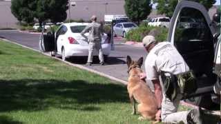 Fire And Police Videos | Albuquerque Police Department K9 Unit Traffic Stop Training