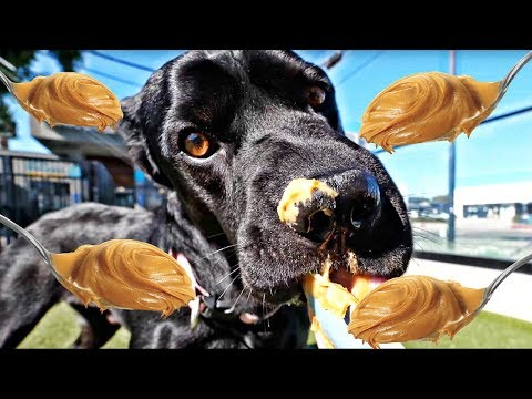 RESCUE DOGS TRY PEANUT BUTTER ...