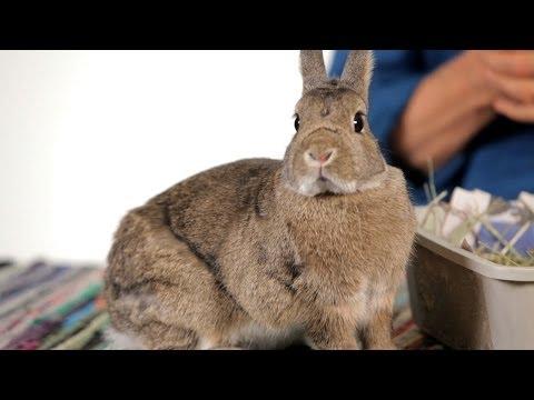 Are Rabbits Good Pets for Children?   Pet Rabbits