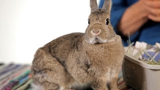 Are Rabbits Good Pets for Children? | Pet Rabbits