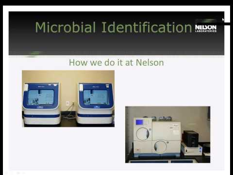 Microbial Identification: When to Do It and How It's Done