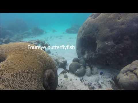 Swansea University Tropical Marine Ecology Fieldtrip Fish ID