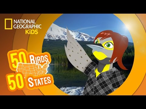 Oregon - Feat. Rapper MC Carrie the Western Meadowlark | 50 BIRDS, 50 STATES