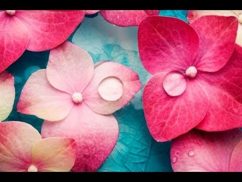 6 Hour Relaxing Spa Music: Massage Music, Calming Music, Meditation Music, Relaxation Music, �