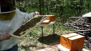 Backyard Beekeeping Part 7(S1:E7): Hive Inspection