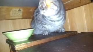Бешеный Кот MARSIK