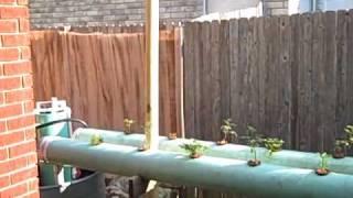 Aquaponics - NFT setup in Texas