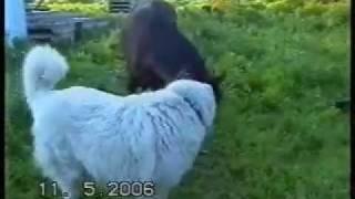 Собака с Конь-собакой