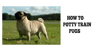 How To Quickly Potty Train Pugs