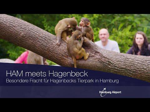 Besondere Fracht für den Hagenbecks Tierpark