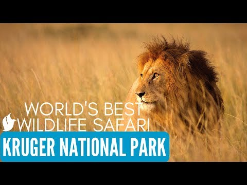 Kruger National Park, Wildlife Safari, South Africa Tourism
